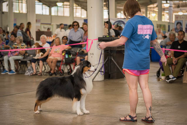 hawaii-pet-expo-2019-honolulu-blaisdell-fokopoint-3389 Hawaii Pet Expo 2019