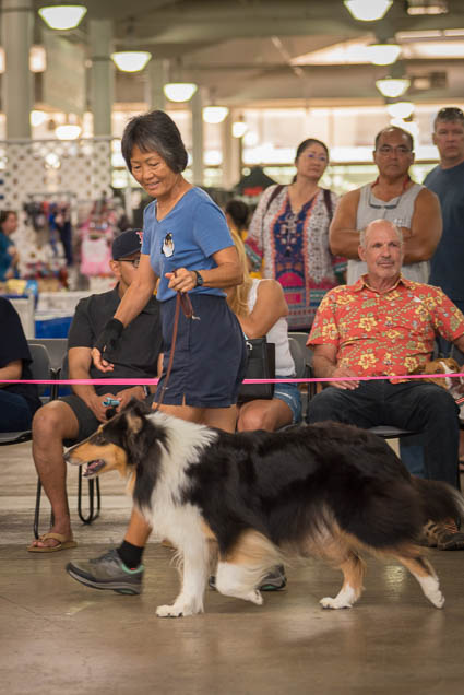 hawaii-pet-expo-2019-honolulu-blaisdell-fokopoint-3414 Hawaii Pet Expo 2019