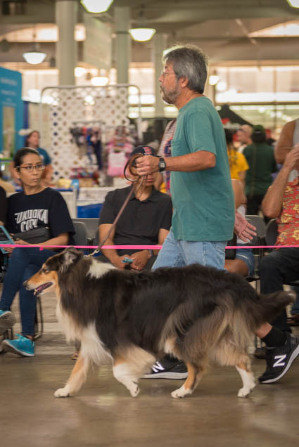 hawaii-pet-expo-2019-honolulu-blaisdell-fokopoint-3415 Hawaii Pet Expo 2019