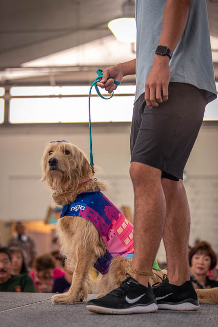 celebrities-pets-fashion-show-2019-honolulu-fokopoint-8864 Celebrities and their Pets Fashion Show 2019