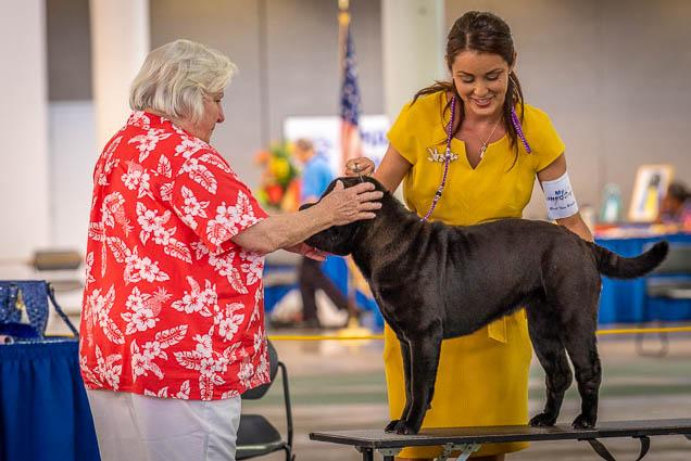 hawaiian-kennel-club-dog-show-2019-blaisdell-honolulu-fokopoint-7032 Hawaiian Kennel Club Dog Show 2019