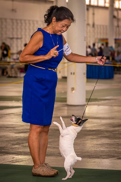 hawaiian-kennel-club-dog-show-2019-blaisdell-honolulu-fokopoint-7053 Hawaiian Kennel Club Dog Show 2019
