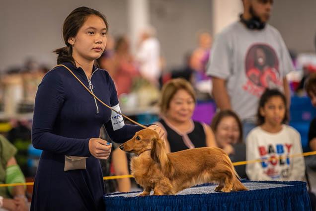 hawaiian-kennel-club-dog-show-2019-blaisdell-honolulu-fokopoint-7206 Hawaiian Kennel Club Dog Show 2019
