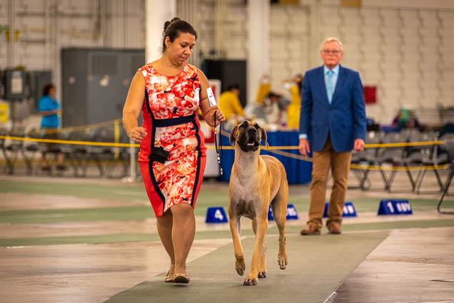 hawaiian-kennel-club-dog-show-2019-blaisdell-honolulu-fokopoint-7300 Hawaiian Kennel Club Dog Show 2019