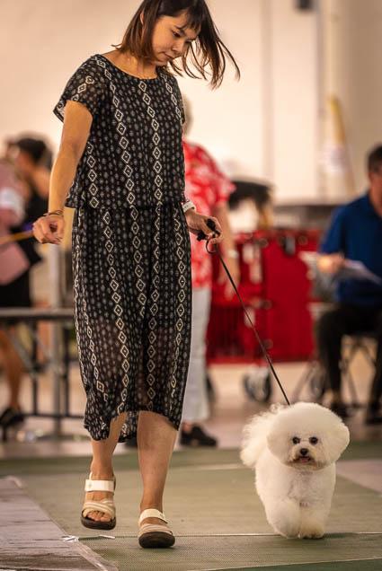 hawaiian-kennel-club-dog-show-2019-blaisdell-honolulu-fokopoint-7420 Hawaiian Kennel Club Dog Show 2019