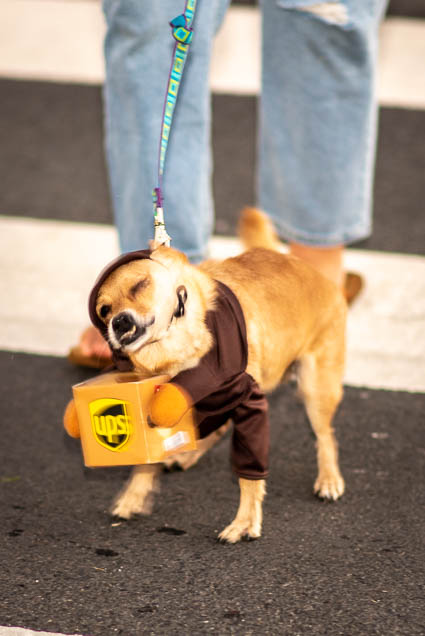 ups-driver-costume-petblock-paina-honolulu-2019-fokopoint-1704 PetBlock Paina at Victoria Ward Park