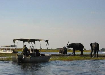 Sunway Botswana Chobe river cruise elephants