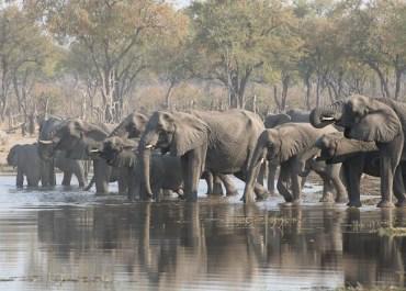 Sunway Botswana elephants drinking - Hans de Vries