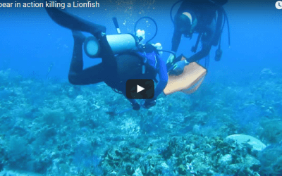 Foldspear video, hunting a lionfish