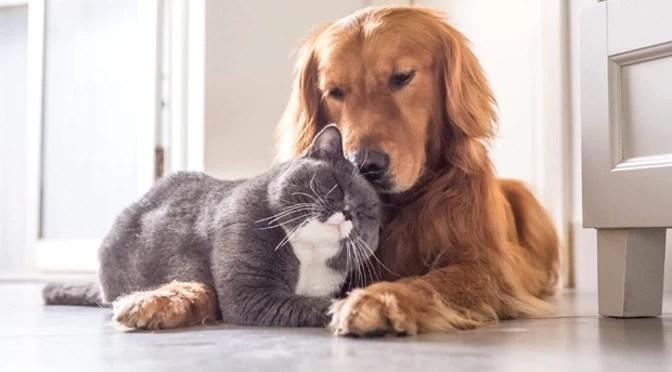 Read more about the article Transporte intermunicipal permite levar cães e gatos, mas é preciso observar regras