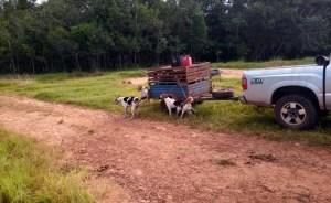 Read more about the article Caçadores flagrados com 19 cães e lanças são presos pela PMA