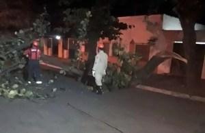 Read more about the article Carro fica danificado após queda de árvore na região central de Corumbá