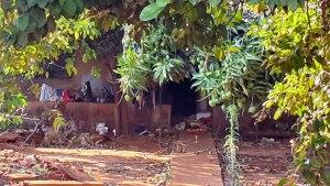 Read more about the article Perícia suspeita que cães mutilaram corpo de idosa encontrada morta em Campo Grande