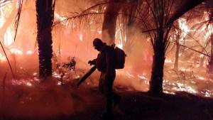 Read more about the article Combate às queimadas no MS ganha reforço de mais 120 brigadistas e bombeiros