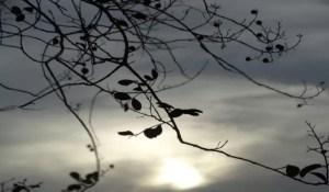 Read more about the article Ar frio e seco se mantém predominante nesta terça-feira em MS