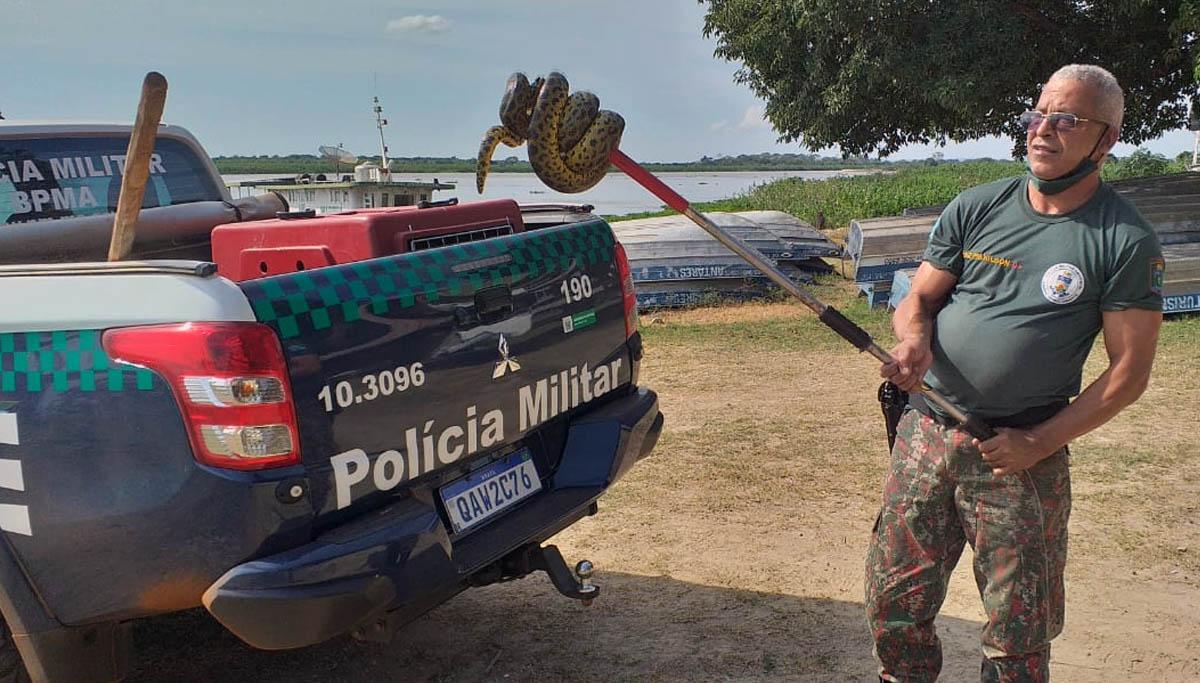 You are currently viewing PMA captura Sucuri de 1,5 metro em banco de praça na região portuária de Corumbá