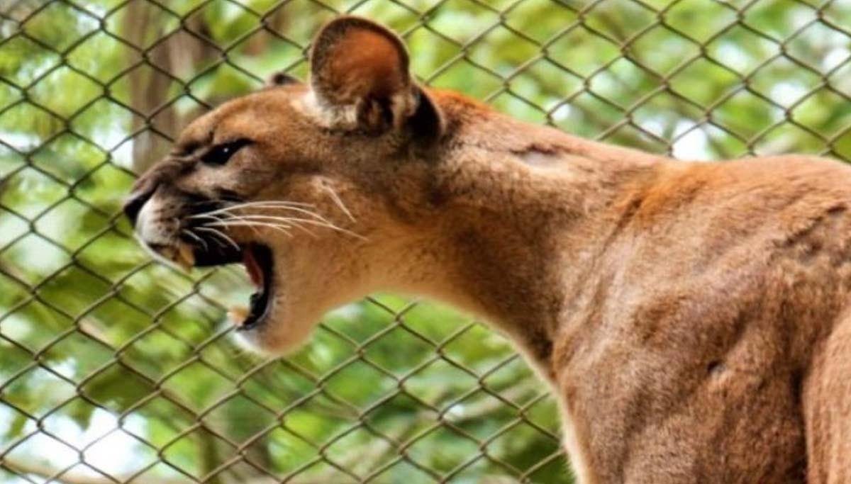 You are currently viewing Governo sanciona lei que define as normas para proteção da fauna de MS