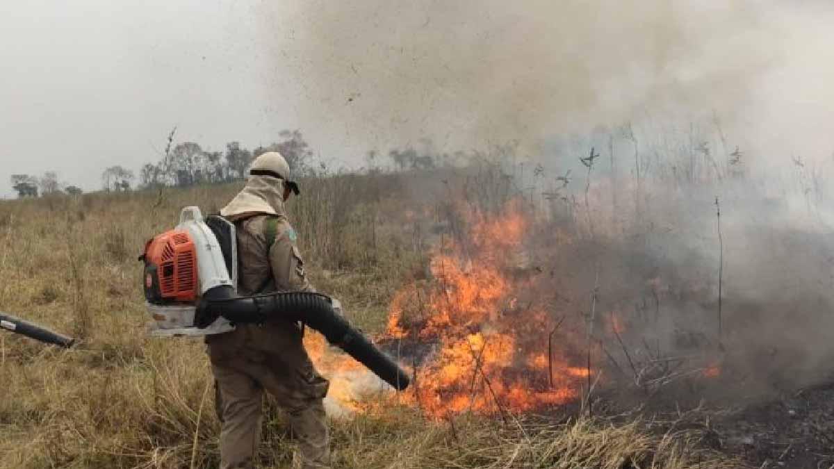 You are currently viewing Chegada da chuva no Pantanal elimina os focos de calor; bombeiros monitoram região