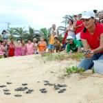 Hoje tem abertura de ninhos de tartarugas em Anchieta