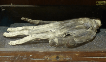 The hand of glory on display at Whitby Museum www.badobadop.co.uk - Own work, CC BY-SA 4.0, https://commons.wikimedia.org/w/index.php?curid=36864122.