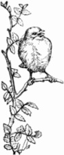 Little Bird by Harrison Weir (1824-1906), from a book by James Johonnot (1823-1888) https://commons.wikimedia.org/w/index.php?curid=25164150