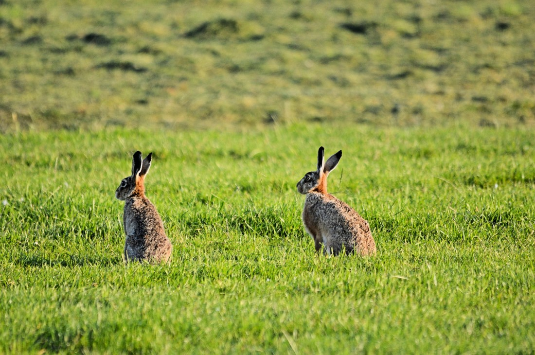 """""""I realised hares had a specific magical connection to my childhood home"""" http://www.publicdomainpictures.net/view-image.php?image=125875&picture=hare"""