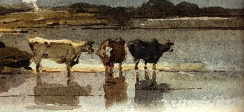 Illustration of three cows in a lake.