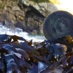Seaweed Spa Bar