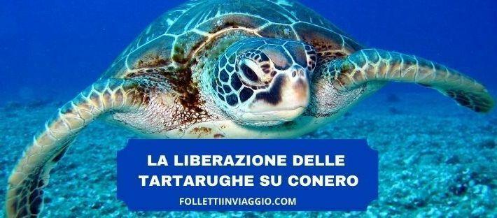 tartarughe-liberazione-conero