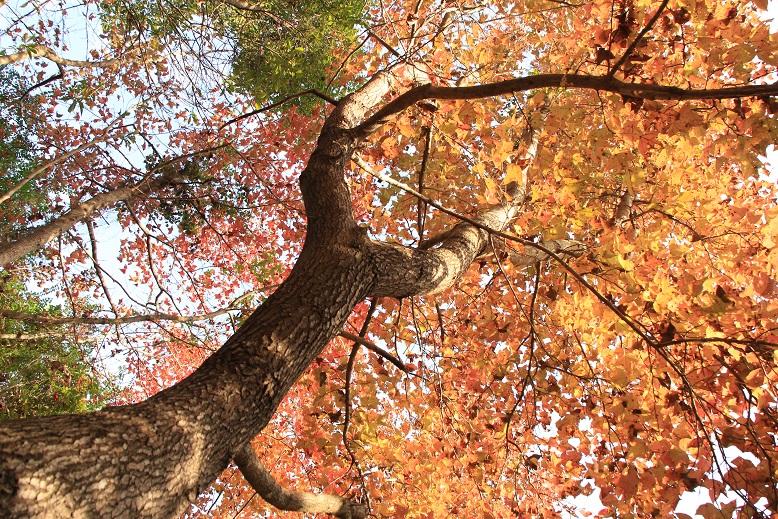 站在樹下拍攝