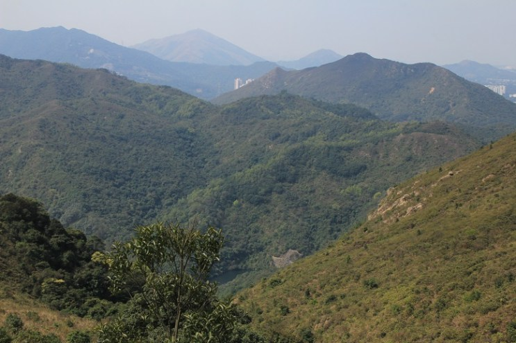 回望山下的鶴藪水塘