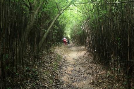 穿過竹林隧道