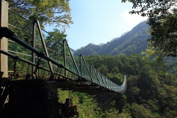 吊橋連接松林區
