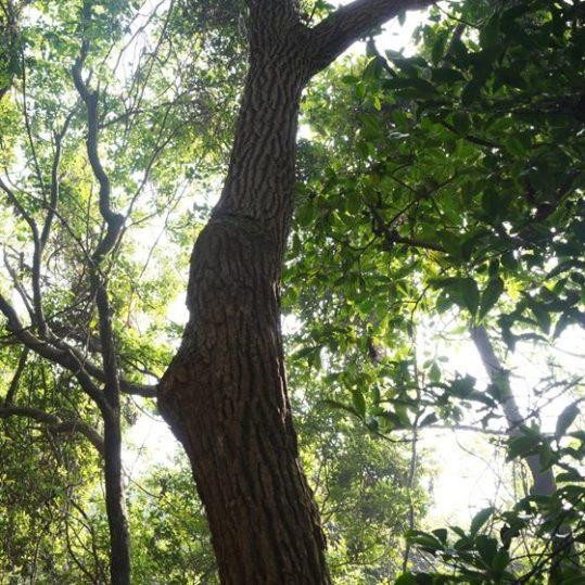高層樹木稱為喬木層