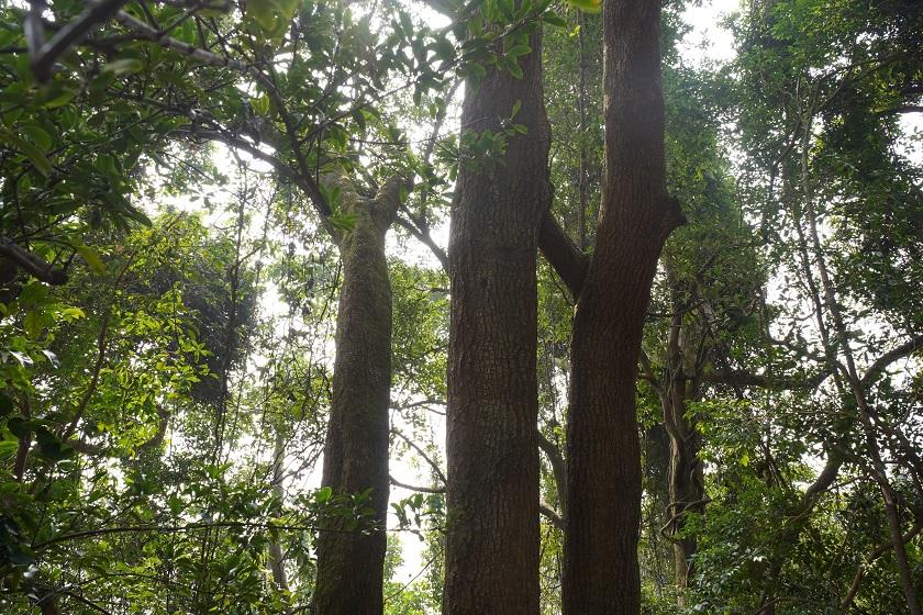 香港島僅存的風水林