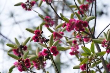 遠看有如桃花,春意盎然