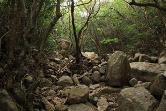 充滿原始森林氣息的澗途