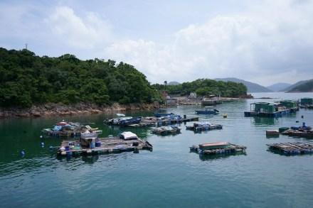 東丫村的魚排