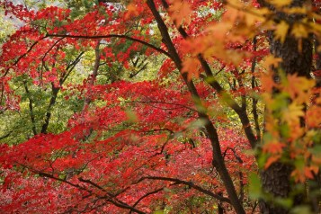 北門一帶的紅葉