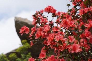 紅花與麻雀石