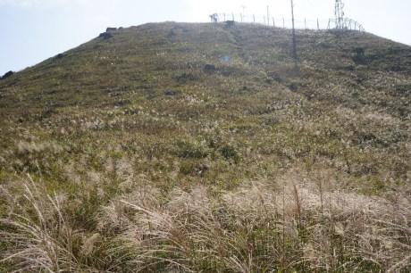 監察站後的山坡佈滿芒草
