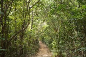 港島林道 - 美景段