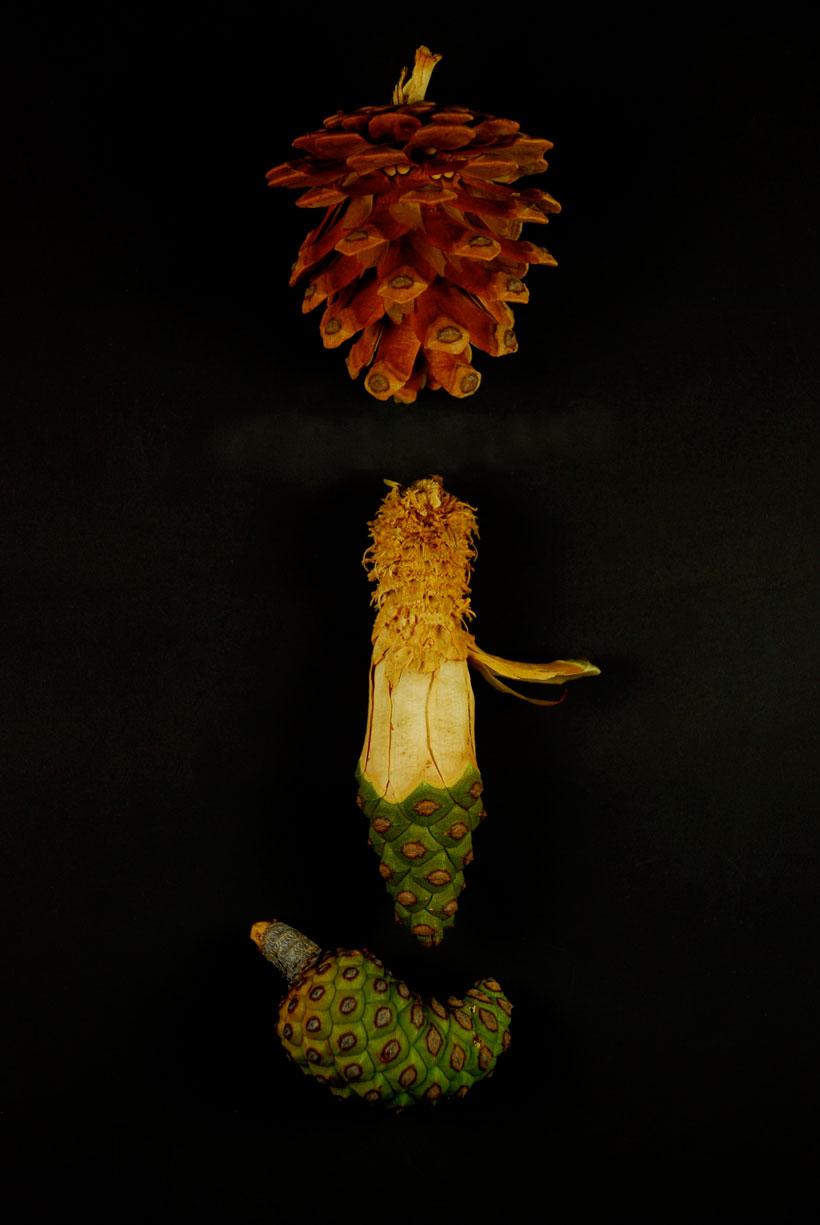 Metamorphosis  © Yvonne Cornell, 2012