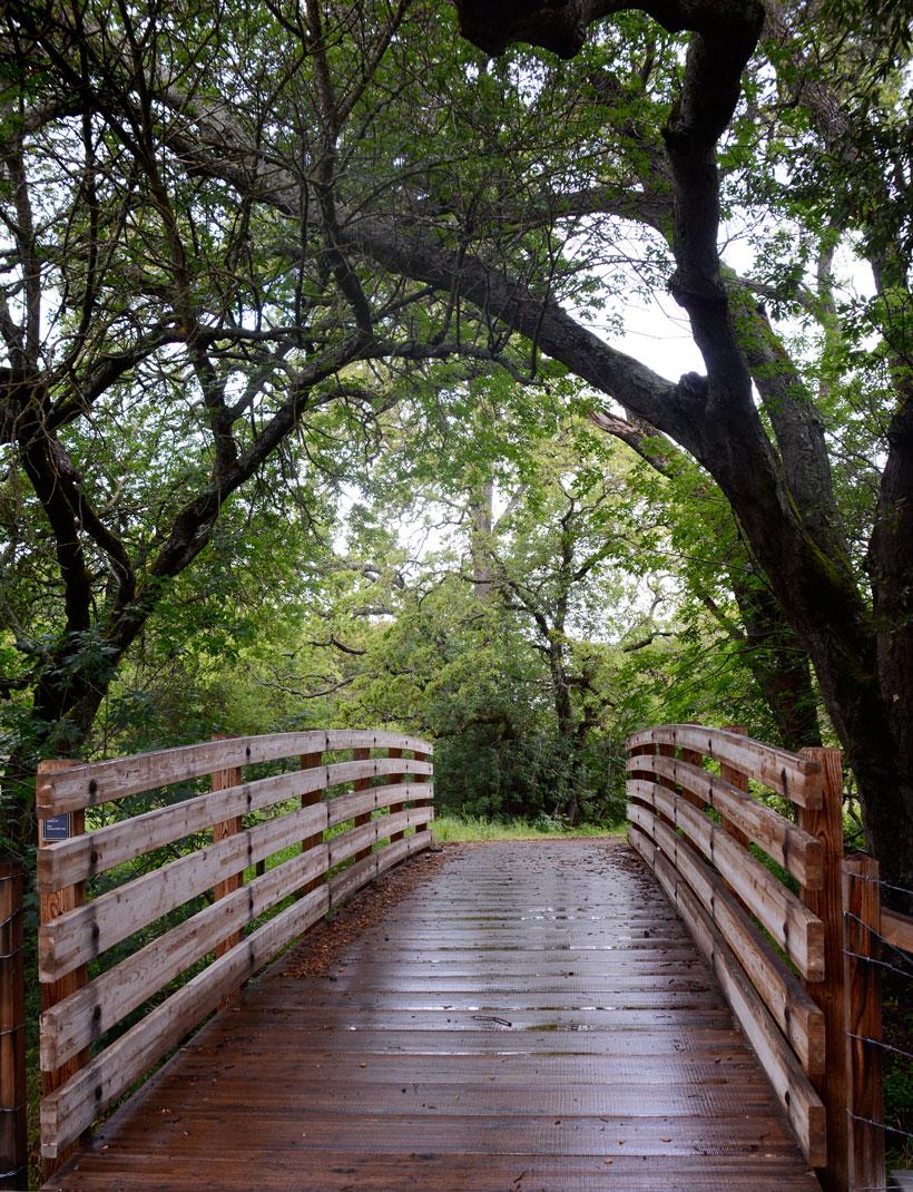 bridgewalk