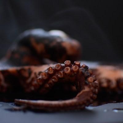 An Octopus Encounter