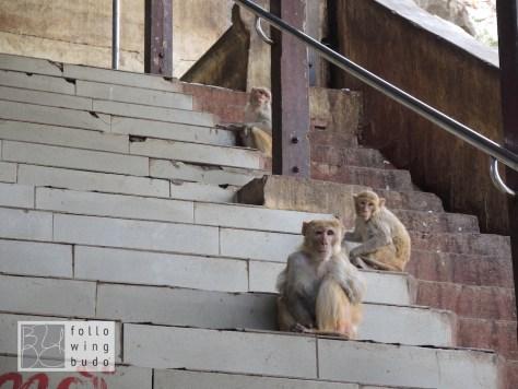 Freche, wild lebende Affen stibitzen was nicht niet- und nagelfest ist