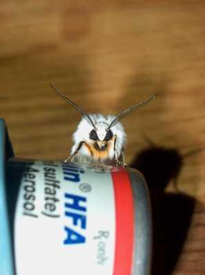 Moth Face, White