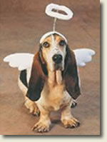 Dog with halo and wings