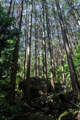 Descending Mt Yaki-yama on the Iseji route