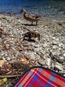 Naomi VanDoren Travel New Zealand day 7-5